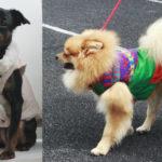 Идея для бизнеса на дому: пошив одежды для собак
