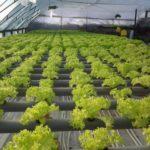 Бизнес идеи по выращиванию
