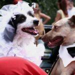 Бизнес идея: собачья свадьба