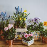 Выращивание комнатных растений на продажу
